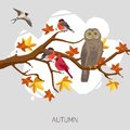 Birds on tree owl bullfinches and swallow autumn maple branch vector illustration Stock Images