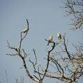 Birds at Tree Royalty Free Stock Photo