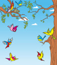 Birds in the trees Royalty Free Stock Photo