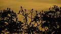 Birds on the Trees Royalty Free Stock Photo