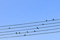 Birds on a wire Royalty Free Stock Photo