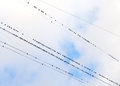 Birds on a wire against the sky Stock Photography