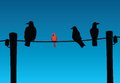 Birds on wire black and red sitting Stock Photography
