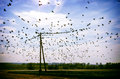 Birds on a wire flock of in sky sunny day sitting electric wires Stock Photography