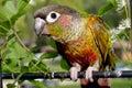 Birdy Royalty Free Stock Photo