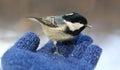 Birdy marsh tit feeding on my hand Stock Photo