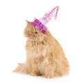 Birthday cat Stock Photography