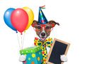 Birthday dog with balloons and a big present Stock Photography