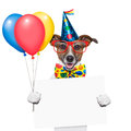 Birthday dog with balloons and a white placard Stock Images