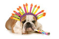 Birthday dog english bulldog wearing hat blowing on horn isolated on white background Royalty Free Stock Image