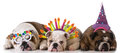 Birthday dogs Royalty Free Stock Photo