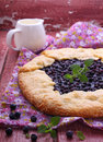 Biscuit with the addition of cornmeal blueberries Stock Image