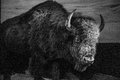 Bison black and white statue of buffalo Stock Photography
