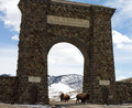 Bison herd migrates through gateway arch Royalty Free Stock Photo