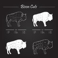 Bison meat cuts scheme set of diagram in vector style white on blackboard Stock Image