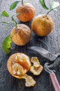 Bitter oranges image of a group of on a rustic wooden surface with pruning shears Stock Photos