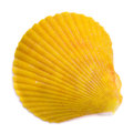Bivalve seashell isolated on white background top view Stock Image