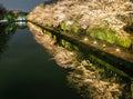 Biwa lake canal with sakura tree at night Stock Image