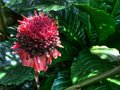 Bizarre Flower Royalty Free Stock Photo