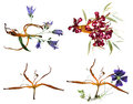 Bizarre lily petals and pressed geranium Royalty Free Stock Photo