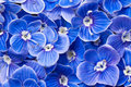Błękitny kwiaty Zdjęcia Stock