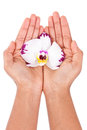 Black african american woman hand holding an orchid flower isolated on white background Stock Photos