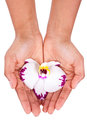 Black african american woman hand holding an orchid flower isolated on white background Stock Images