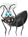 Black ant holding sugar cube Royalty Free Stock Photo