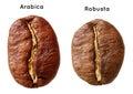 Black arabica, robusta coffee bean Royalty Free Stock Photo
