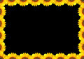Black background with sunflower framing Royalty Free Stock Photo