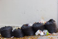 Black bags of garbage and waiste on blank dirty wall. Royalty Free Stock Photo