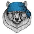 Black bear American bear Wild animal wearing bandana or kerchief or bandanna Image for Pirate Seaman Sailor Biker