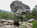 Black bear on mountaintop a rescued is cared for at a north carolina rescue facility Royalty Free Stock Images
