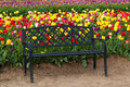 Black Bench with Tulips Royalty Free Stock Photo