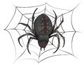 Black big scary spider sitting center of web. Poison spider Royalty Free Stock Photo