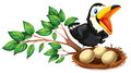 A black bird watching the nest with eggs Royalty Free Stock Photo