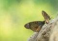 black and blue striped butterfly Royalty Free Stock Photo