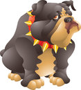 Black bulldog big isolated illustration Royalty Free Stock Images