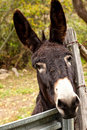 Black Burro behind Fence Stock Photo