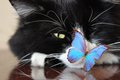 Black cat and blue butterfly Royalty Free Stock Photo