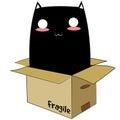 Black Cat in a Box