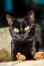 Black cat with bright green eyes Royalty Free Stock Photo