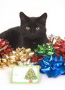 Black cat and christmas bows Stock Photos