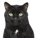 Black cat close-up portrait Royalty Free Stock Photo