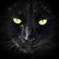 Black cat in dark close up Stock Photo