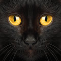 Black cat eyes macro Royalty Free Stock Photo