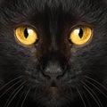 Black cat eyes macro Royalty Free Stock Photo