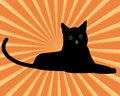Black cat with green eyes on an orange background Royalty Free Stock Images