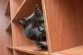 Black cat hiding Royalty Free Stock Photo