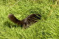 Black cat hunting in undergrowth grass Stock Images